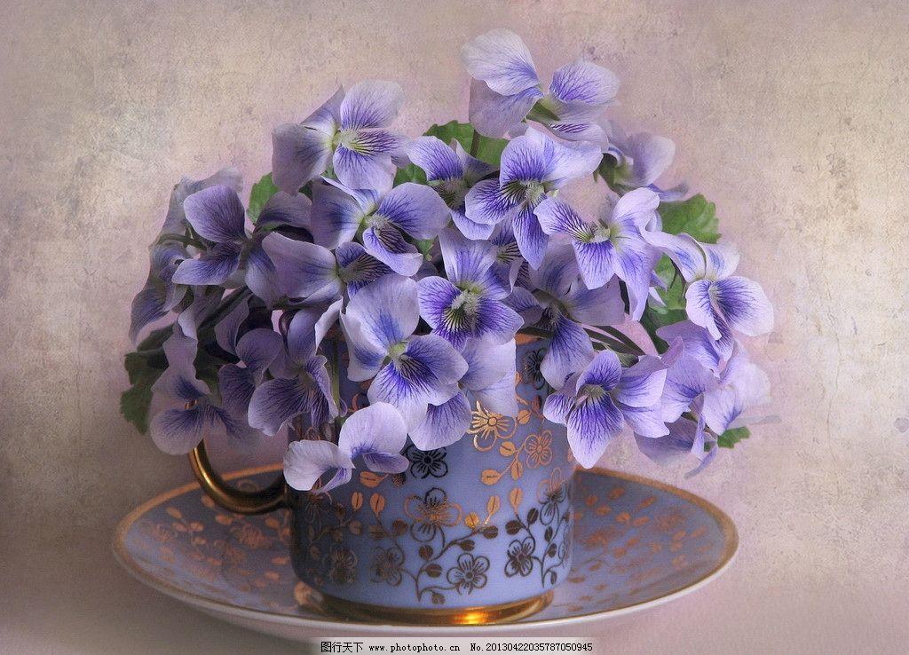 静物摄影 俄罗斯 东欧 静物 摄影 花朵 鲜花 茶杯 咖啡杯 花草 生物