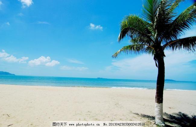 边椰子树图片素材下载