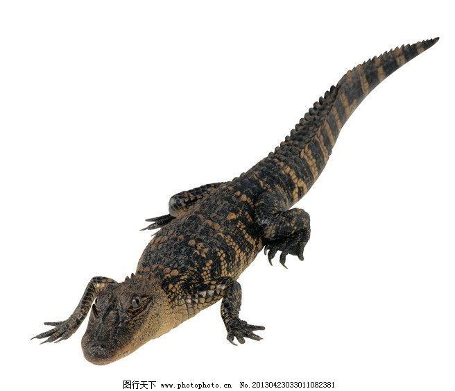 活化石 爬行动物