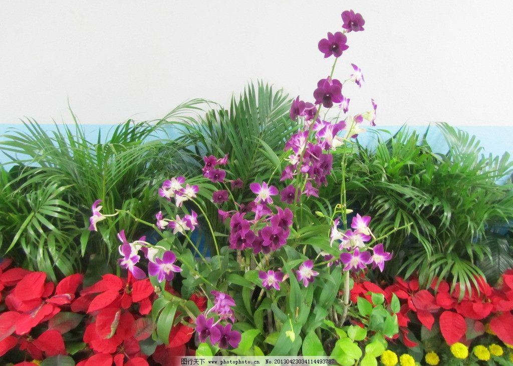 鲜花 泰国 旅游 普吉岛 红花 花朵 植物 叶子 绿叶 黄花 兰花