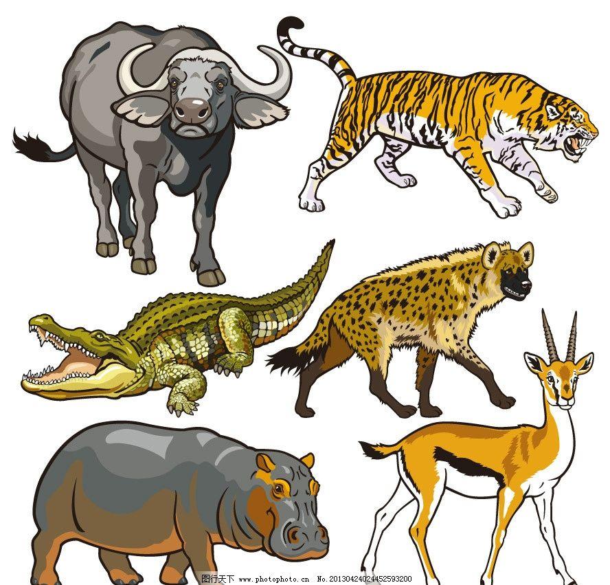 卡通动物图片,非洲野牛 老虎 鳄鱼 猎狗 羚羊 野猪-图