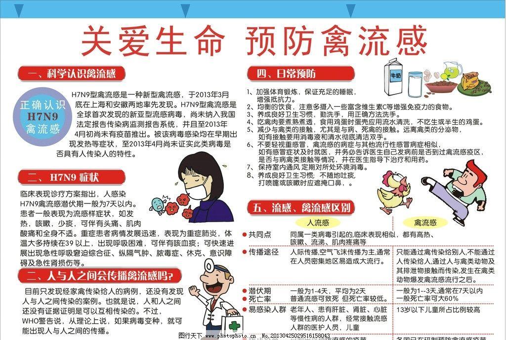 禽流感小报手抄报图片