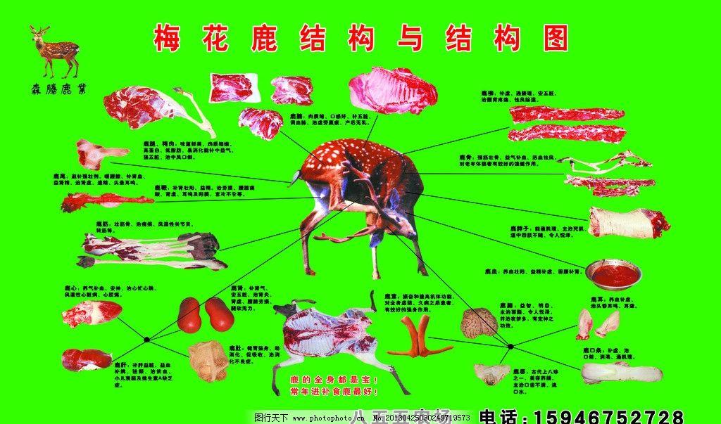 梅花鹿结构图 鹿茸 鹿全身分布图 鹿角 广告设计模板 源文件