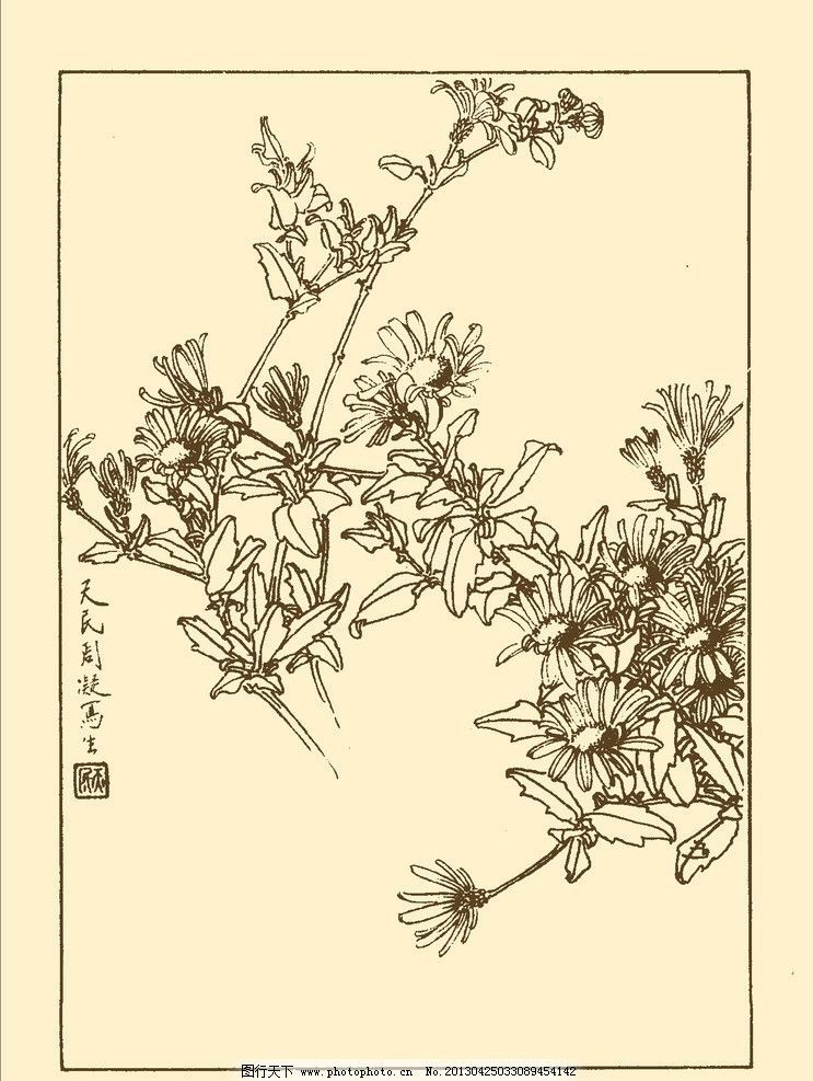 马兰花 鲜花 花卉 花草 植物 白描 中国画 国画 线画 花卉白描 psd