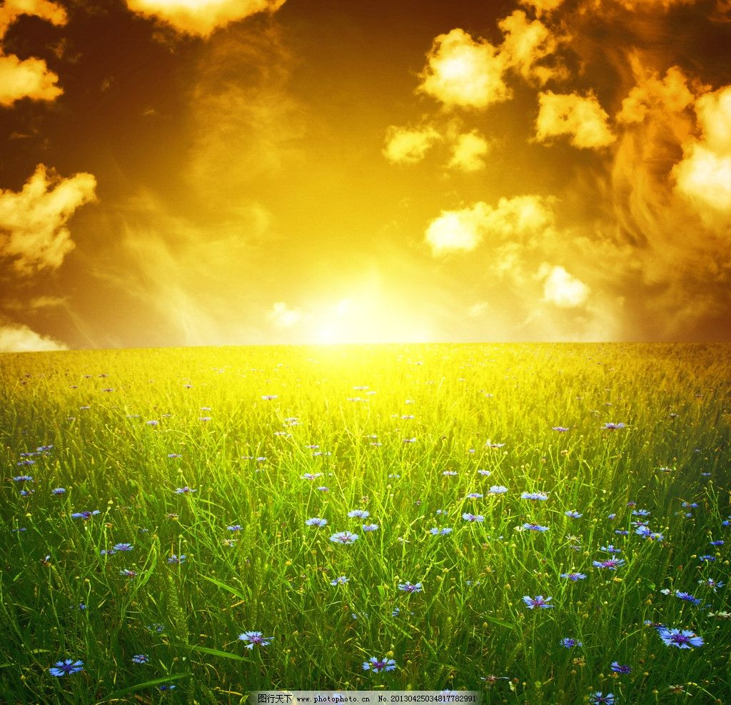 草原/夕阳下的草原花海图片