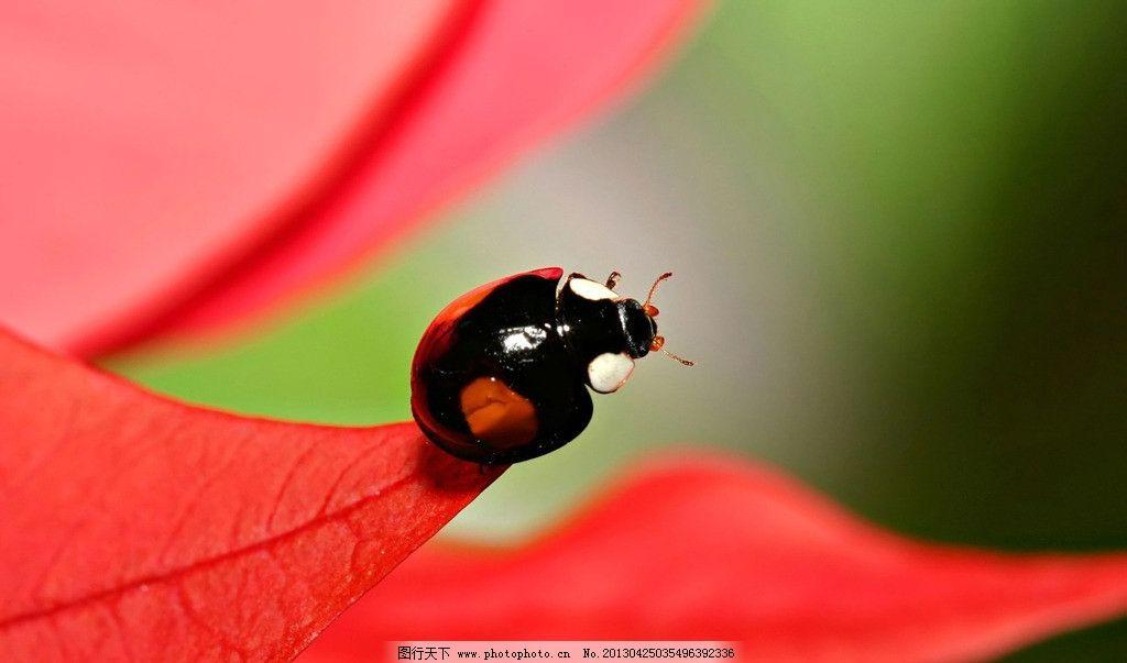 七星瓢虫 甲虫 蚂蚁 绿叶 阳光 自然 绿色 七星 黑蚂蚁 瓢虫 深林
