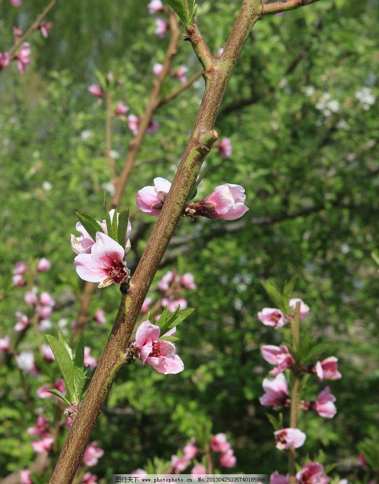 春天的图片手机背景