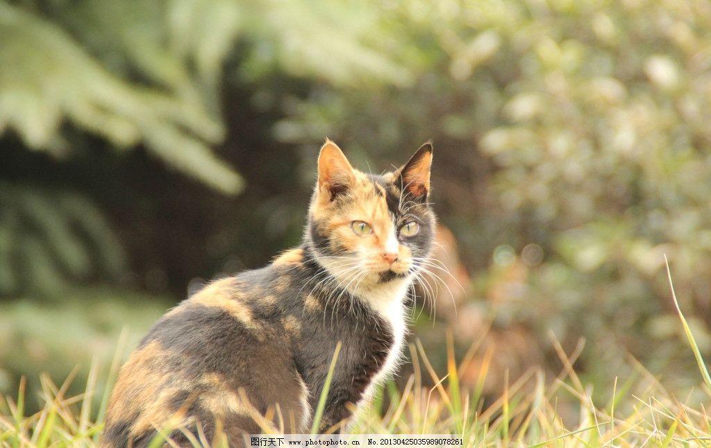 小猫摄影 小猫 摄影 动物 家禽 家禽家畜 生物世界 72dpi jpg