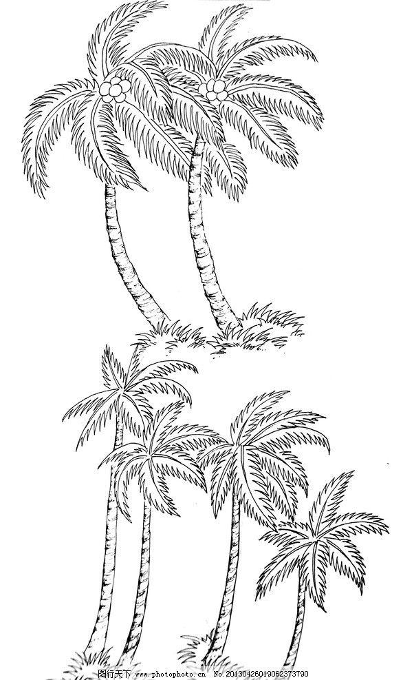 椰树 钢笔白描 速写 手绘 钢笔手绘 植物白描 线描 白描图谱