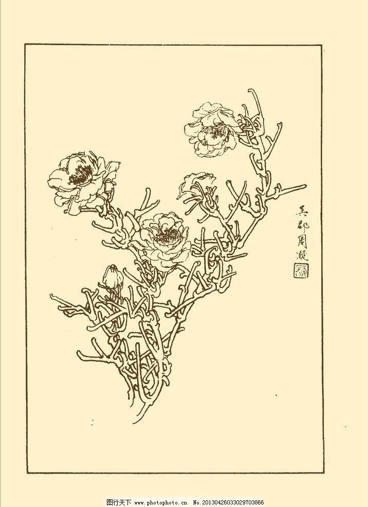 松叶牡丹 白描 花卉 花草 植物 国画 中国画 线画 线稿 花卉白描 psd