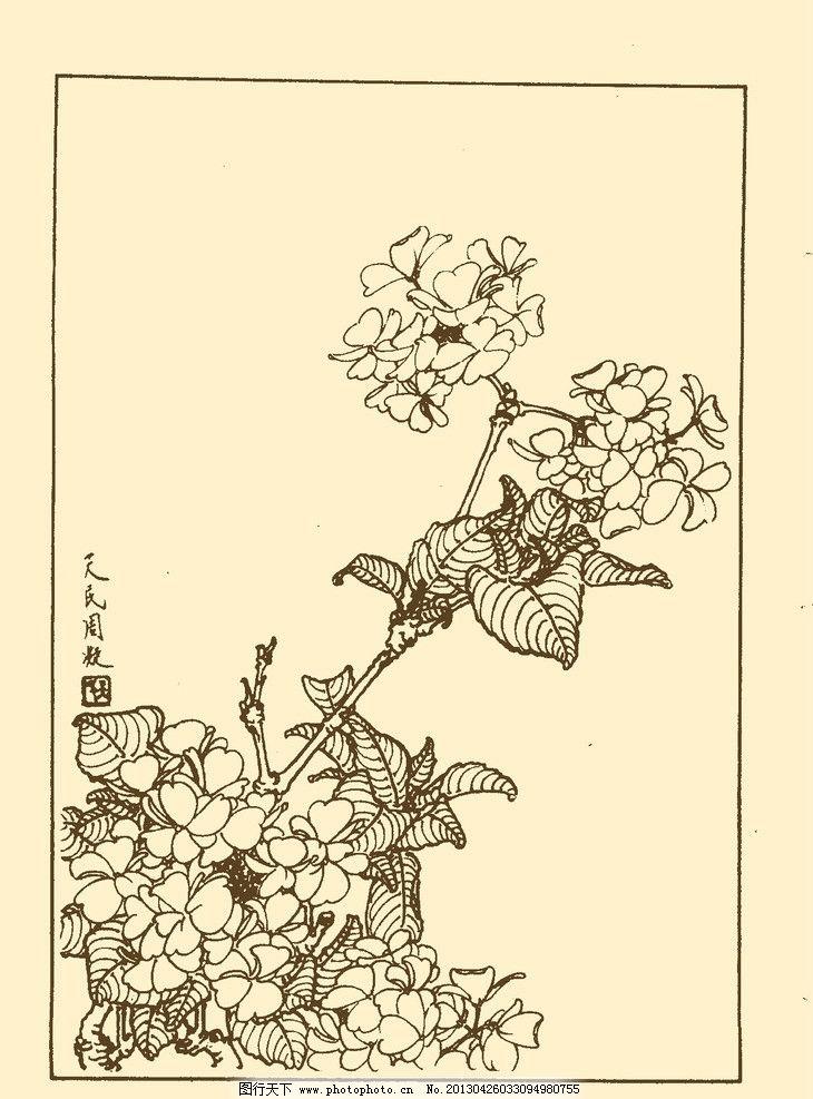 绣球 白描 花卉 花草 植物 国画 中国画 线画 线稿 花卉白描