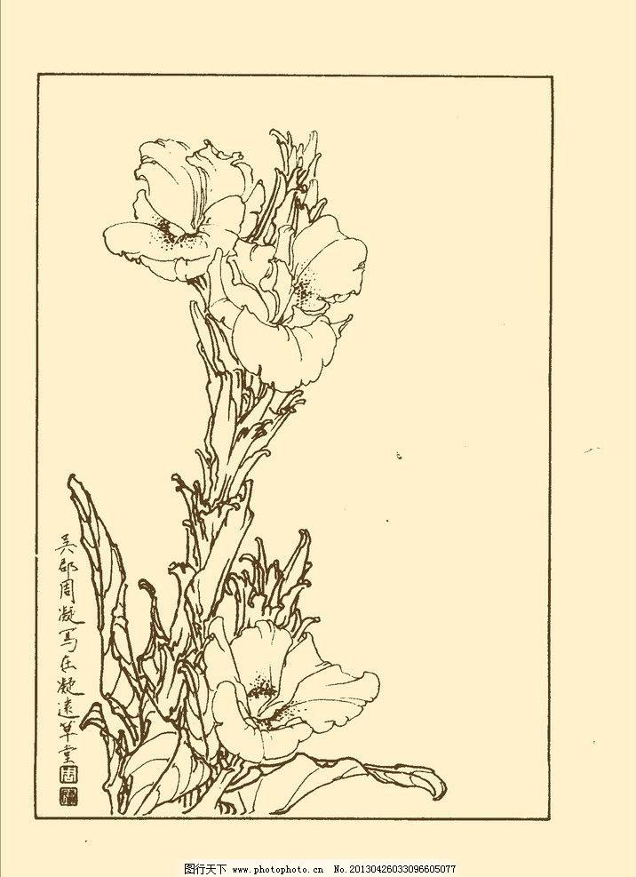 美人蕉 白描 花卉 花草 植物 国画 中国画 线画 线稿 花卉白描 psd