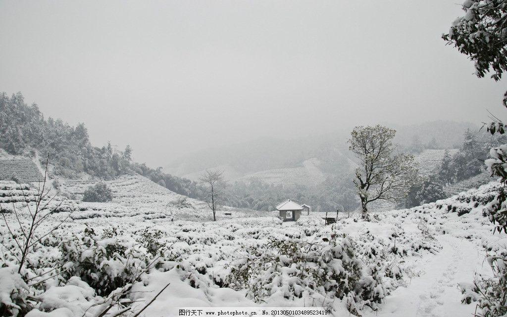雪景 天空 山丘 森林 树木 松树 茶叶 茶树 雪天 山中雪景