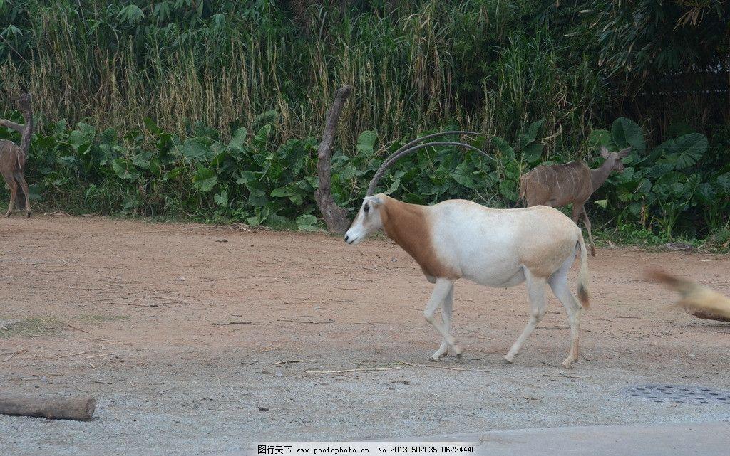 广州动物园图片