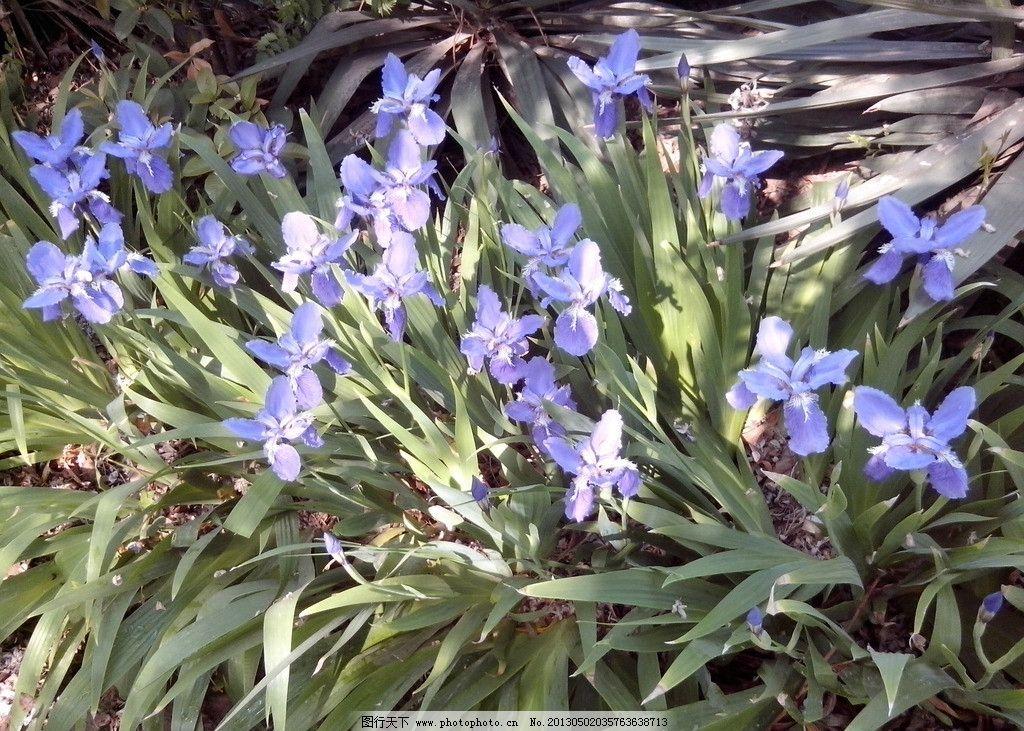 阳光下的兰花图片