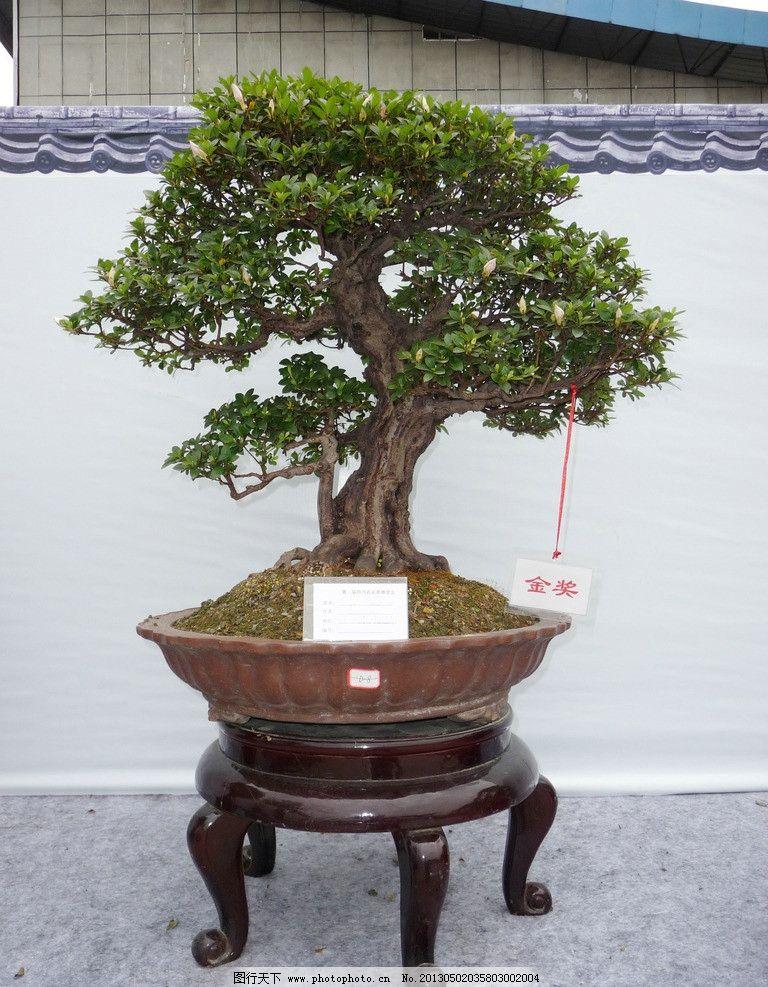 盆景 景观 园艺 艺术      树木树叶 生物世界 摄影 180dpi jpg
