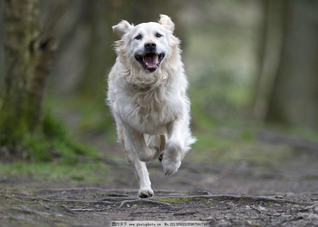 可爱动物跑步gif