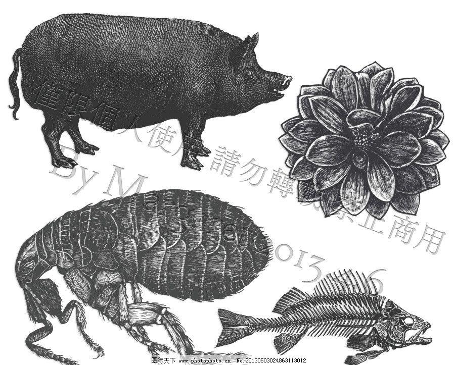 虱子 跳蚤 鱼 鱼骨 花朵 猪 肥猪 大猪 胖猪 素描 白描 线描 线稿图片