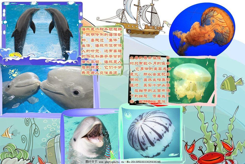 海洋生物主题 动物 信息报 知识 幼儿园 儿童 源文件