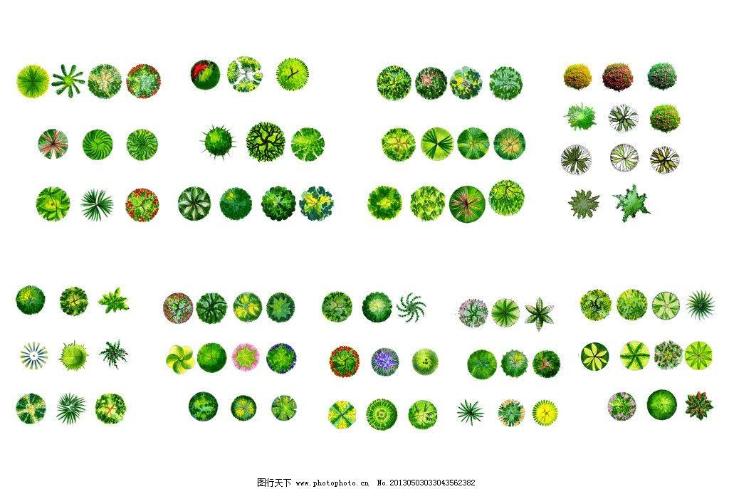植物平面图 植物 平面图 景观 乔木 灌木 psd分层素材 源文件 300dpi