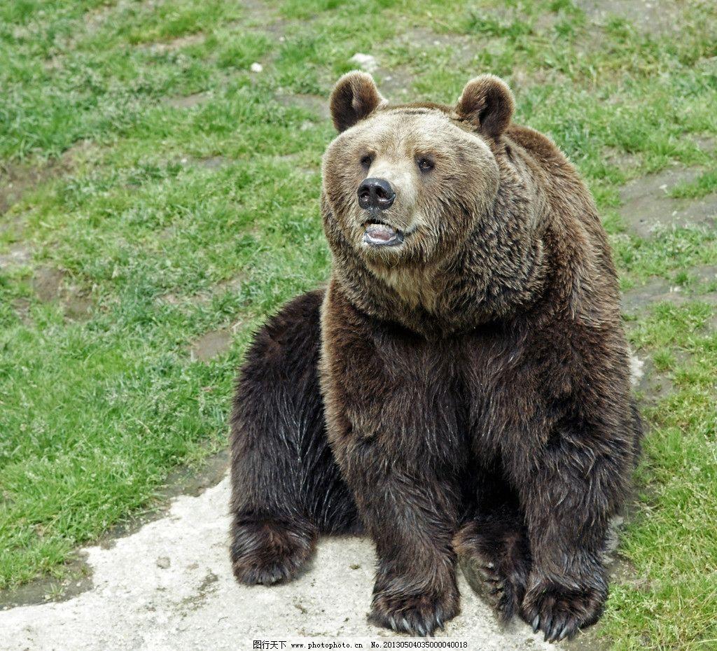 动物 熊科 1024_930