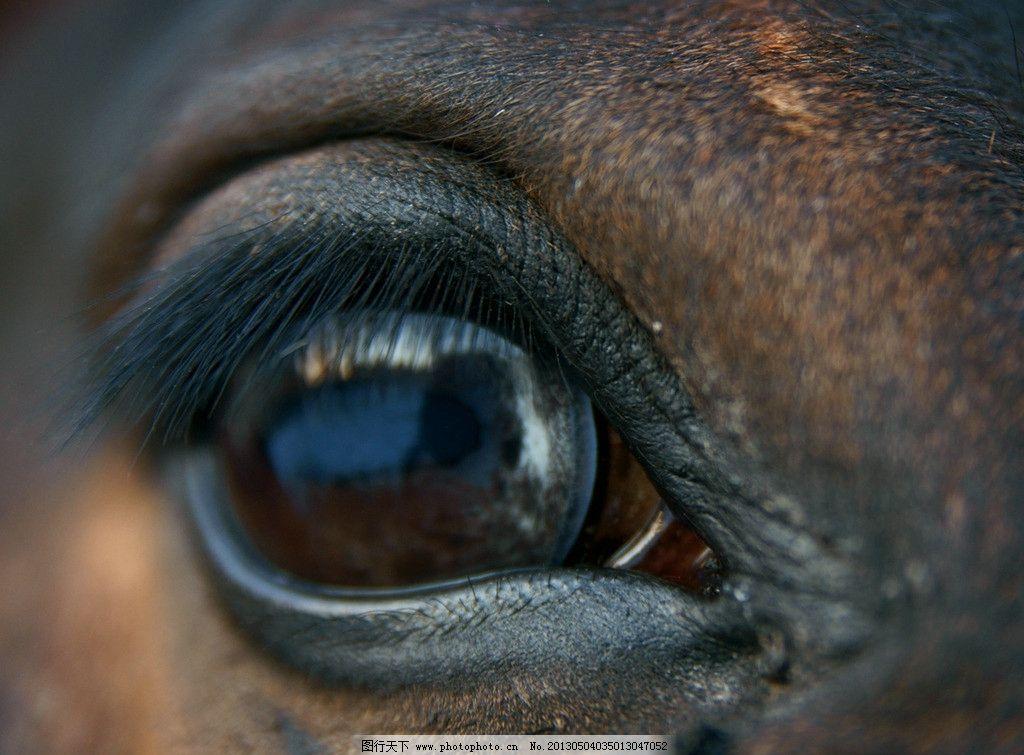 马眼睛 马 马匹 动物 野生动物 骏马 鬃毛 动物世界 生物世界 摄影 72