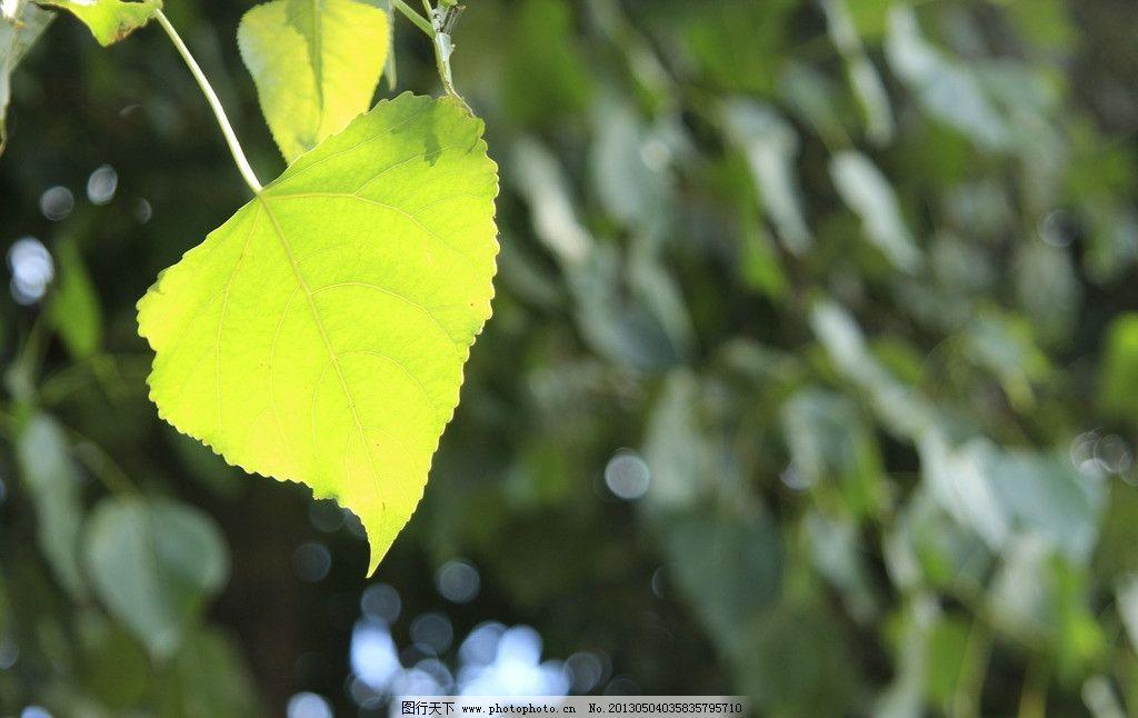 树叶 叶子 夏天 阳光 绿色 树木树叶 生物世界 摄影 72dpi jpg