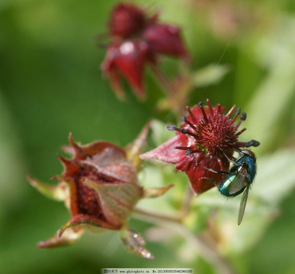 苍蝇 动物 自然 生物 环境 害虫 蚊蝇 昆虫 生物世界 摄影