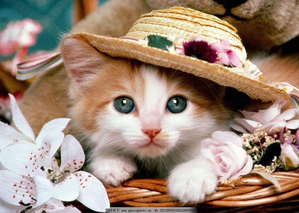 壁纸 动物 灵长目 猫 猫咪