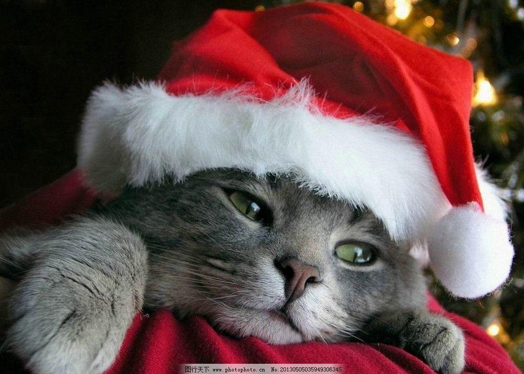 小猫 猫 可爱的 爱干净 朋友 捉鼠 猫咪 猫猫 爬树 宠物 宠物猫 波斯