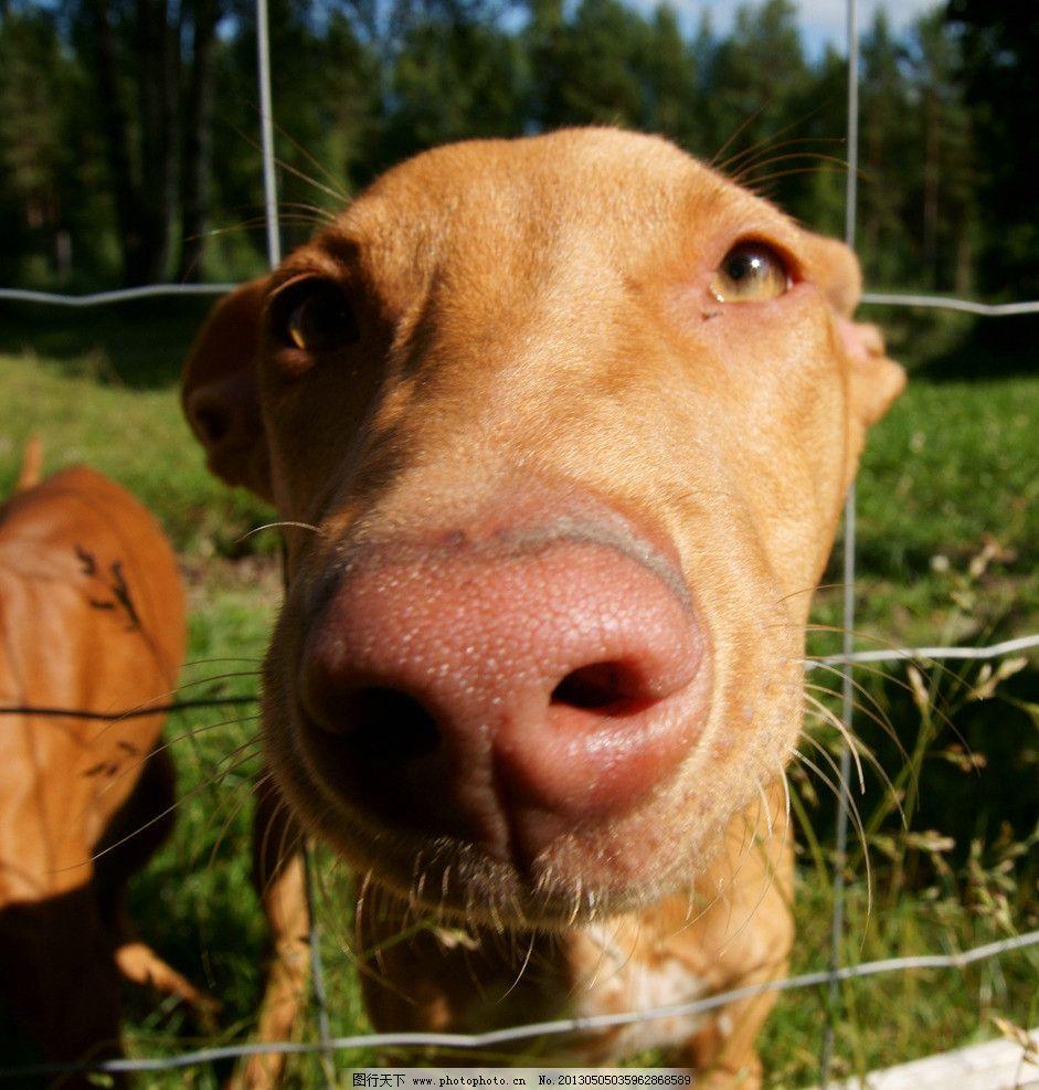 狗狗 狗 小狗 宠物 动物 哺乳动物 笼子 围栏 家禽家畜 生物世界 摄影