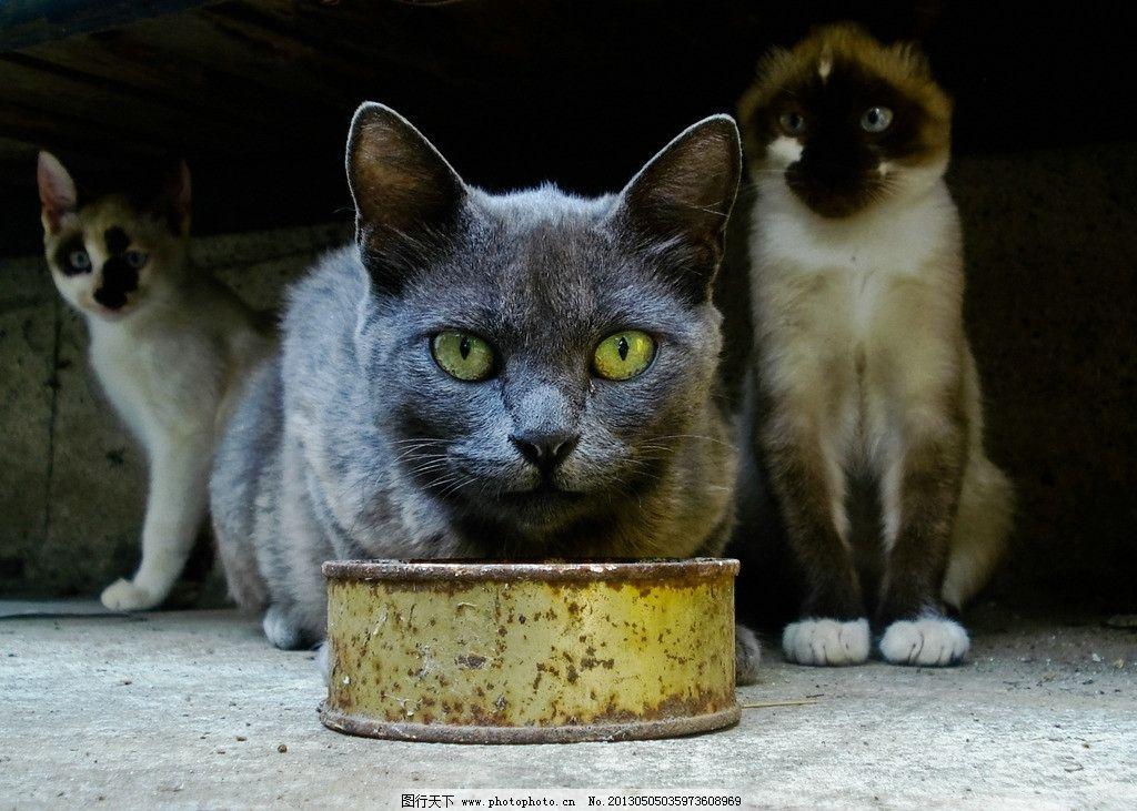 猫猫 爬树 宠物 宠物猫 波斯猫 小花猫 小懒猫 猫咪艺术照 玩耍小猫