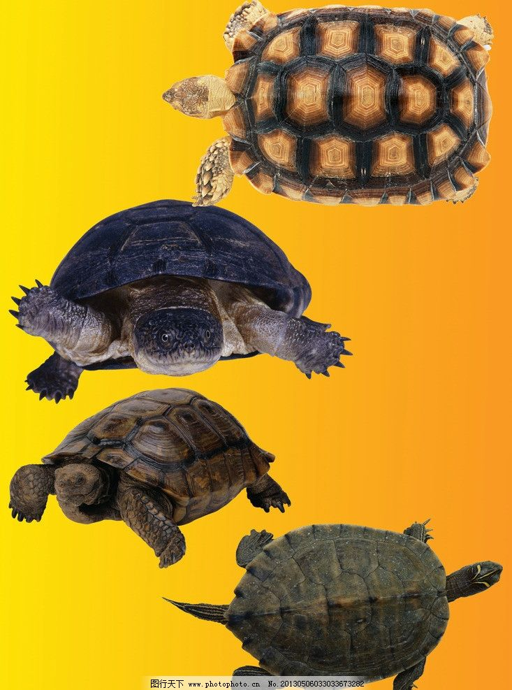 乌龟 吉祥 长寿 爬行动物 两栖动物 源文件