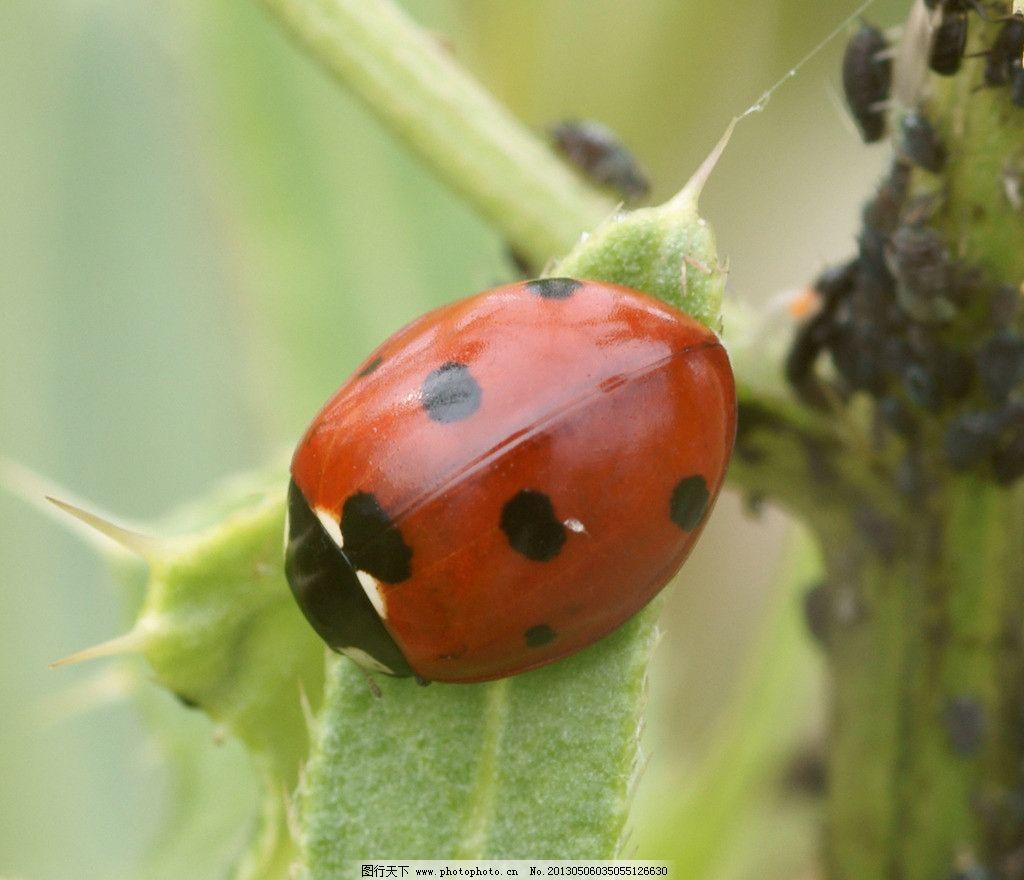 野生动物 物种 甲虫 甲壳虫