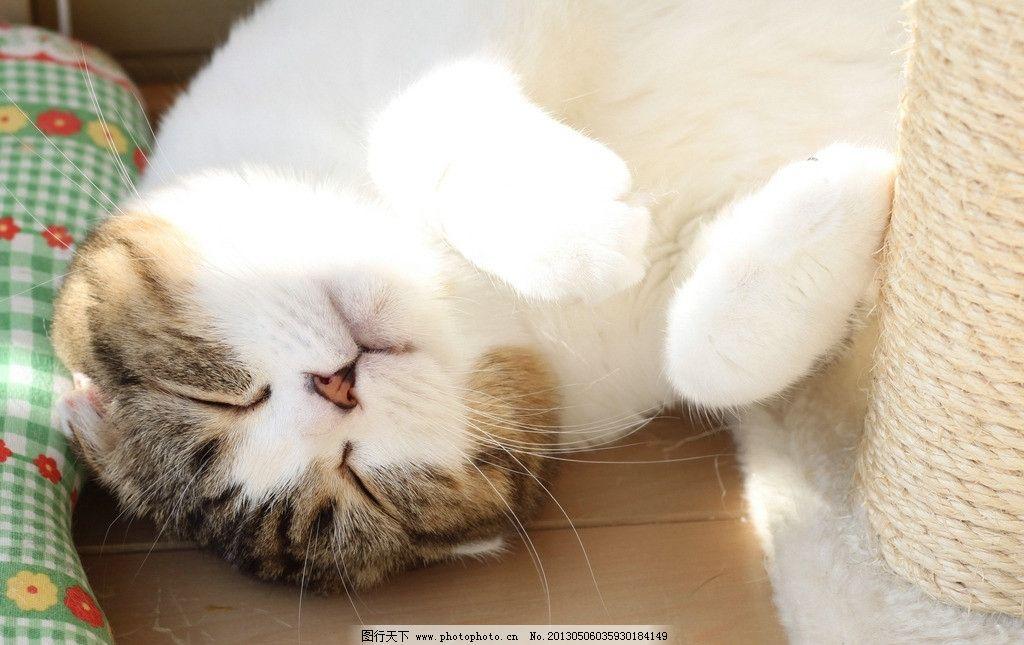 壁纸 动物 猫 猫咪 小猫 桌面 1024_645