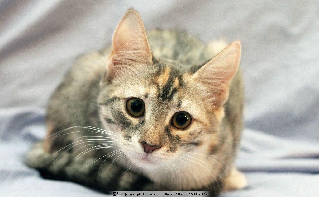 壁纸 动物 猫 猫咪 小猫 桌面 1024_634
