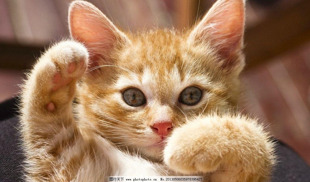 小猫爬树简笔画