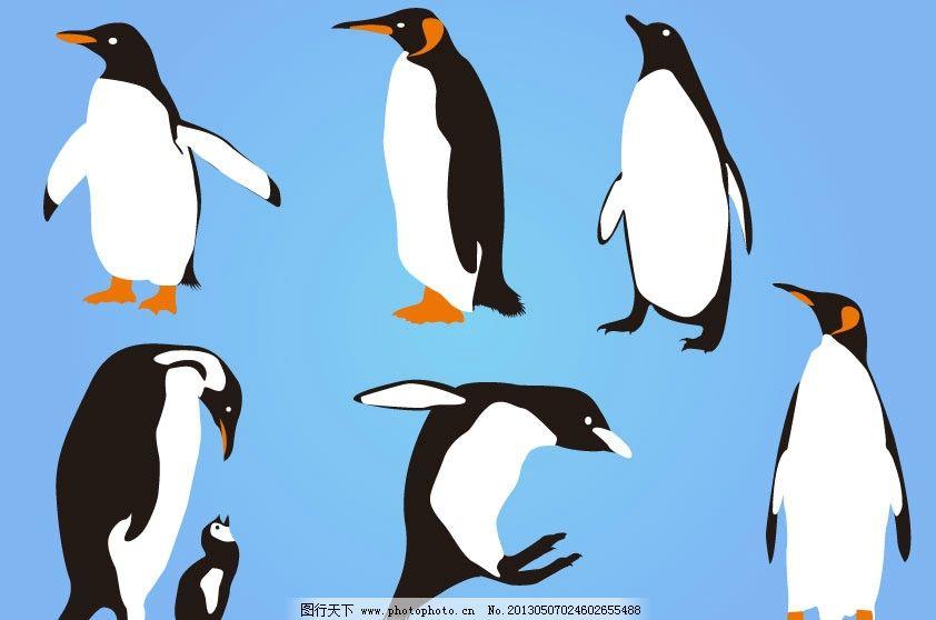 企鹅 小鸟 鸟剪影 动物剪影 飞行动物剪影 鸟 野生动物 可爱的企鹅 手