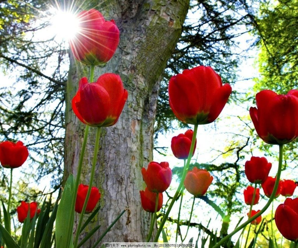 玫瑰花 菊花 花草 树木 树叶 壁纸 墙纸 唯美 优雅 清新 花卉 花瓣 世