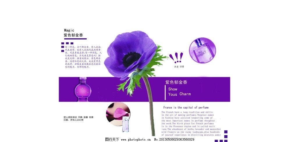 画册 内页排版 内页 排版 紫色 郁金香 香水 画册设计 广告设计 矢量