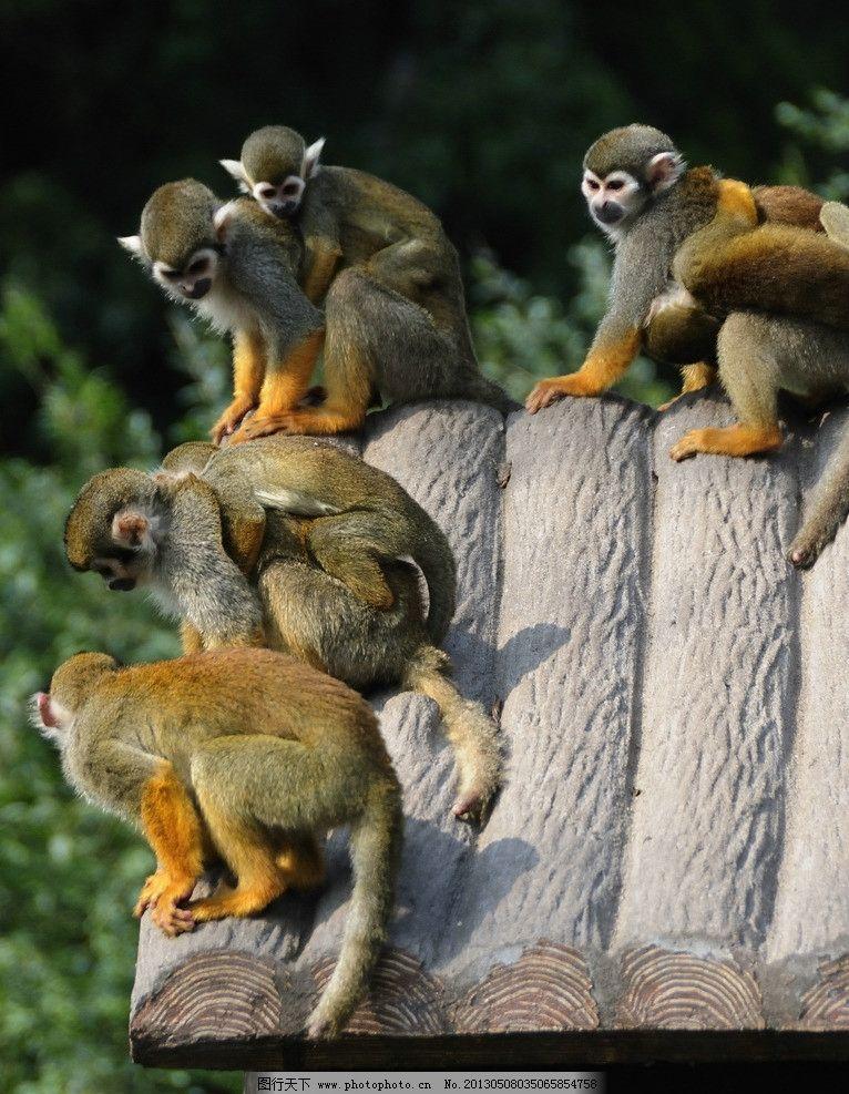 猴群 上海 动物园 猴舍 绿树 母子猴 野生动物 生物世界 摄影 300dpi
