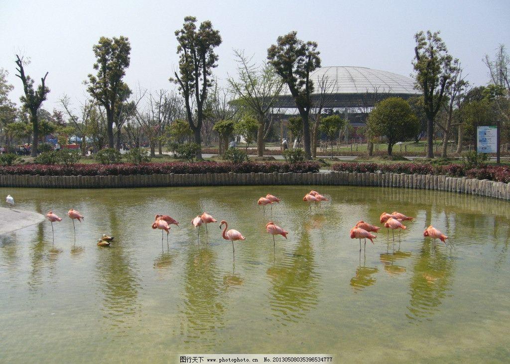 火烈鸟 动物 鸟 水池 风景 鸟类 珍稀鸟类 生物世界 摄影 72dpi jpg