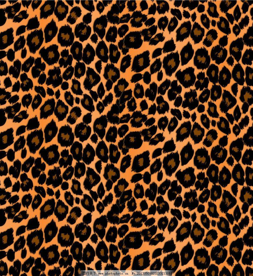 动物纹素材图片