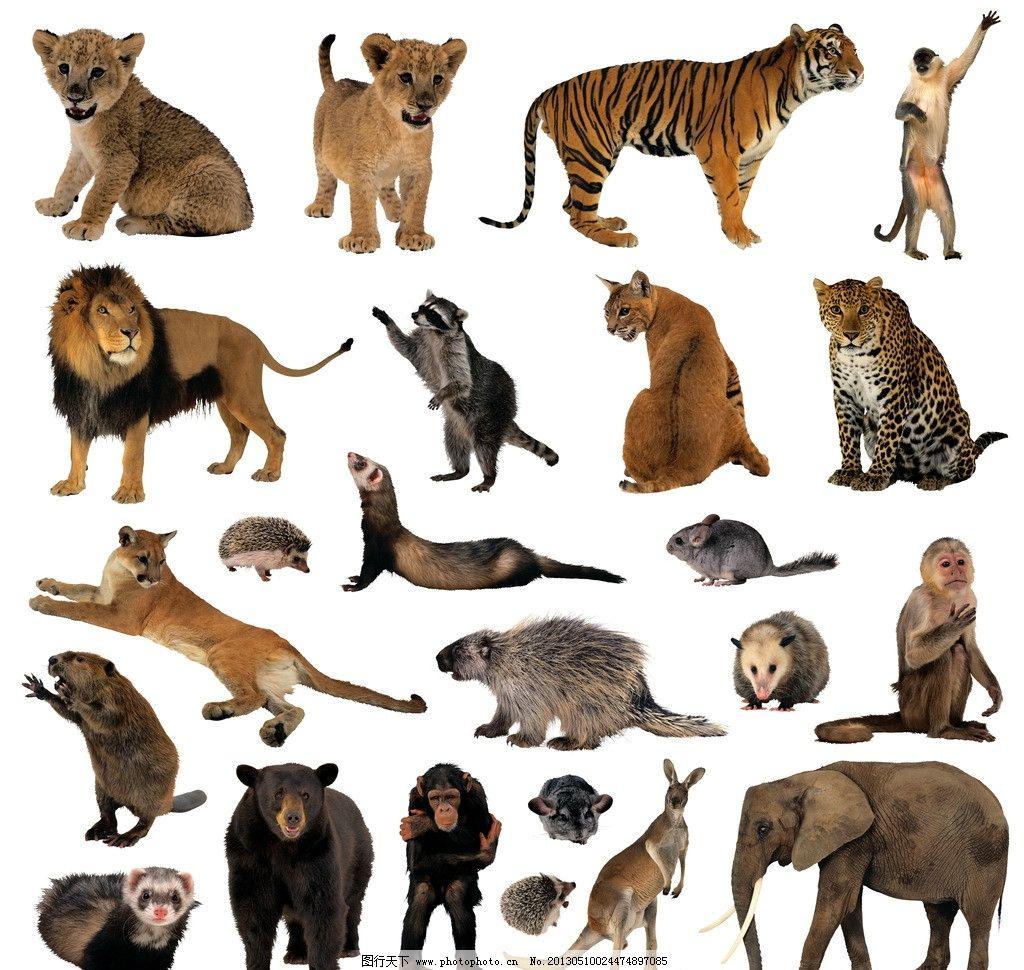 动物 非洲 大象老虎图片
