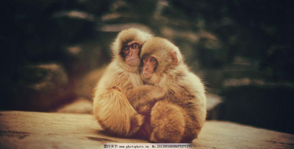 小猴子 拥抱 动物 动物园 玩耍 野生动物 生物世界 摄影