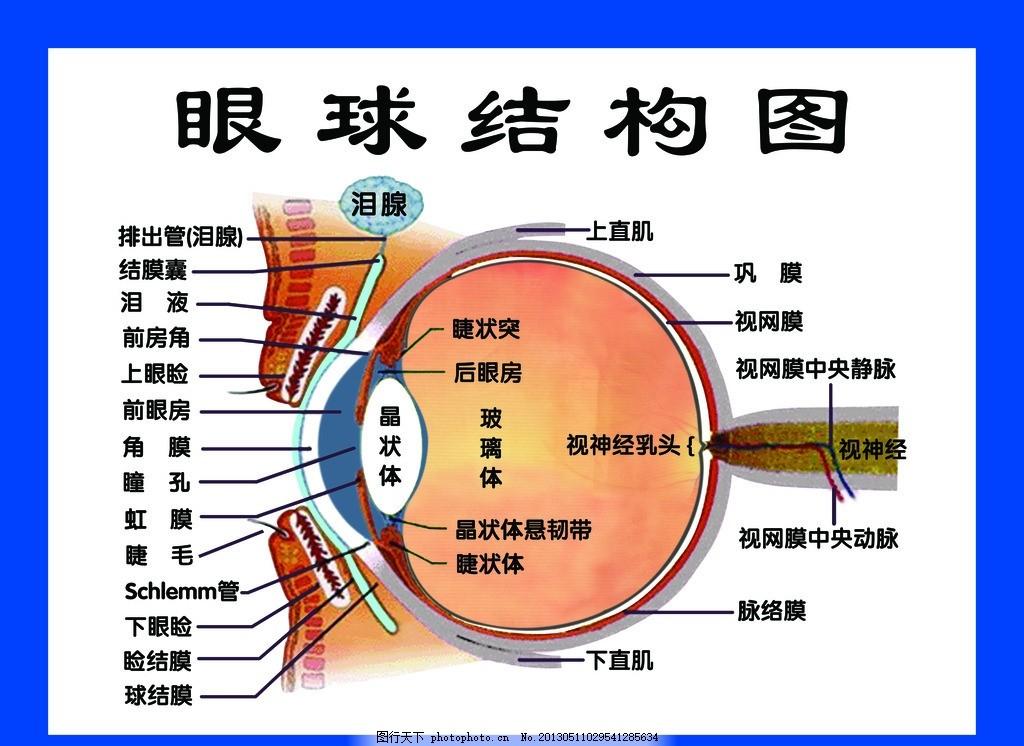 眼球结构图 好视力眼贴 好视力 眼贴 眼睛 眼科 眼镜 设计类图 广告