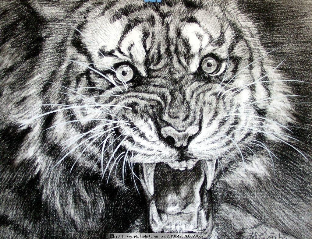 素描虎 越前 画室 素描 老虎 绘画 碳笔画 周口越前画室素描作品 绘画