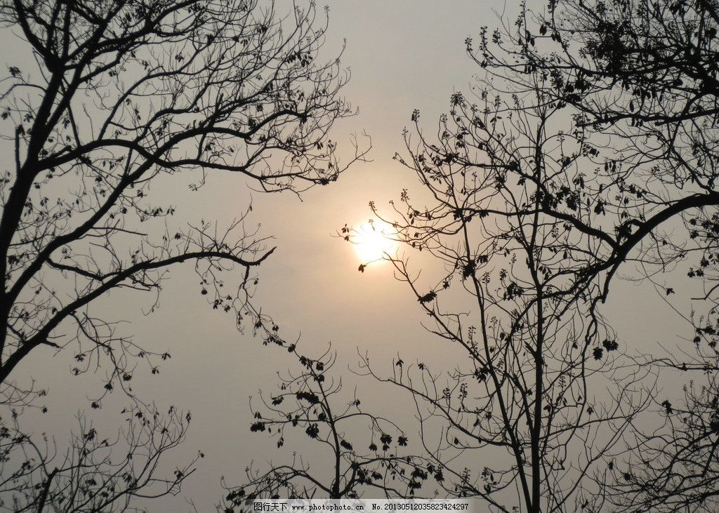 冬天日落 冬天 日落 天空 树枝 灰色 树木树叶 生物世界 摄影 180dpi