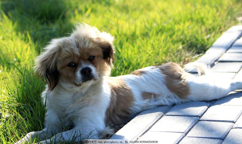 小狗 阳光 菜地 微笑 动物 摄影