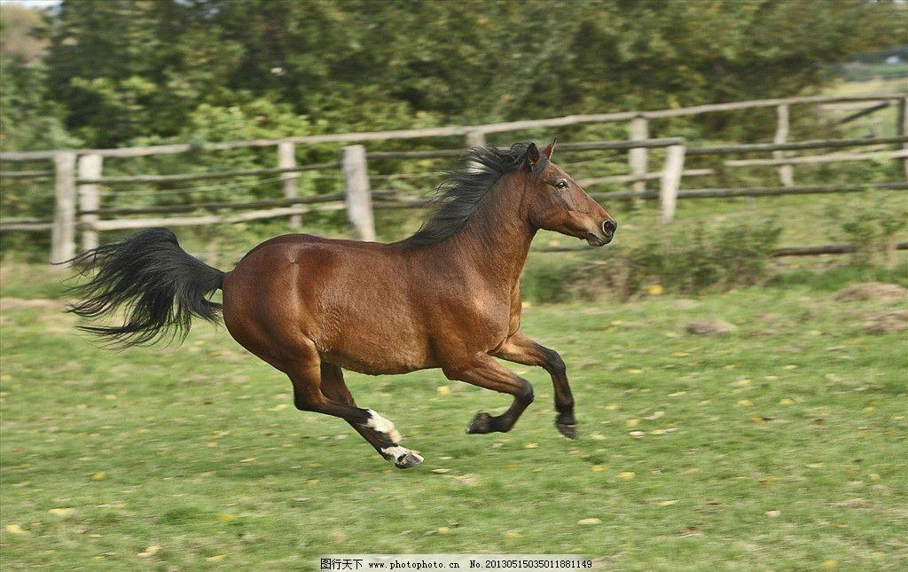 奔马 驯马 赛马 奔跑 狂奔 野马 草地 动物世界 野生动物 生物世界